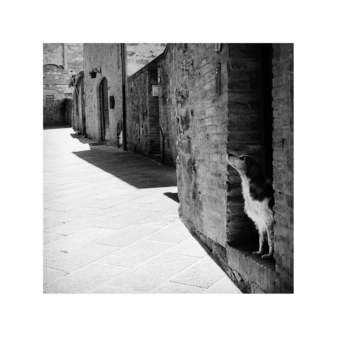 Another blast from the past 💥 Such class Italy's got, even the dogs look as if they just got out of a journal. Tuscany, 2007.