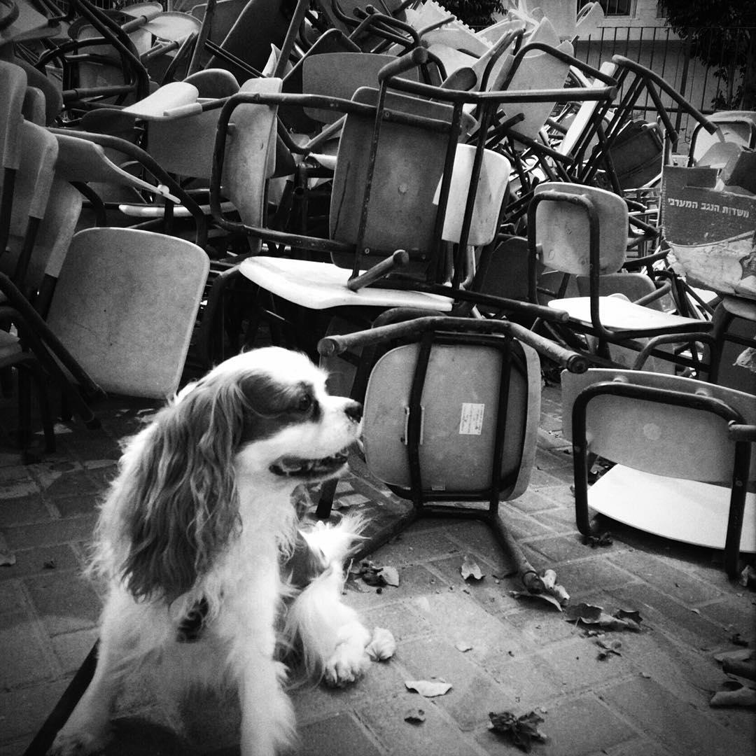 Back to school? (The Cashew version) #nationaldogday 🐶