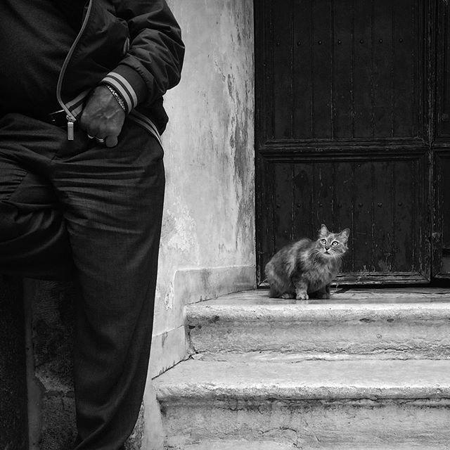 Cat in distress