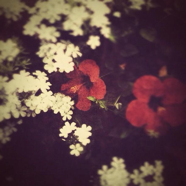 More childhood flowers