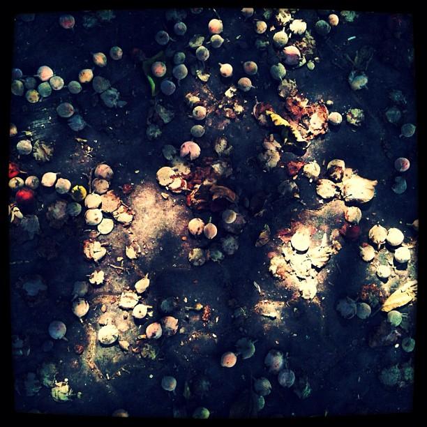 Fruit Stars