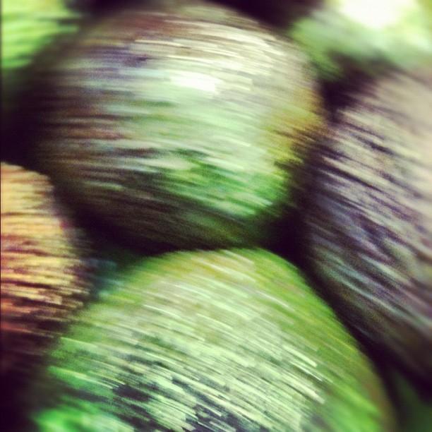 Avocado Stampede