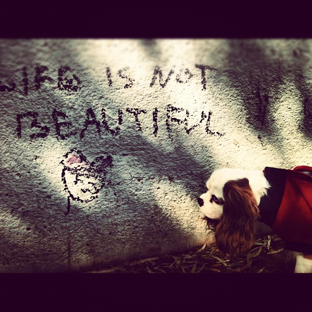 Life Is Not Beautiful