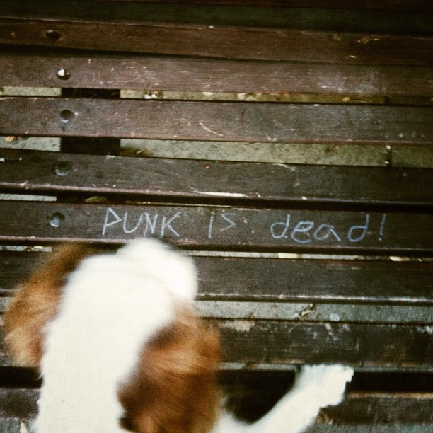 Punk is dead! another one for my