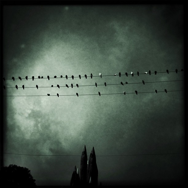 Where do birds go at night?