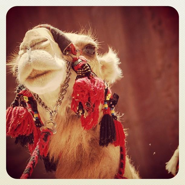 The Camel Triptic - Part II