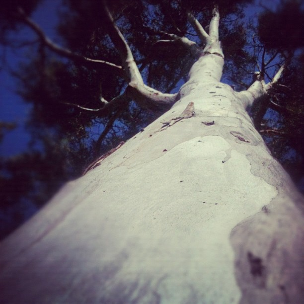 The Tree Monster is back !