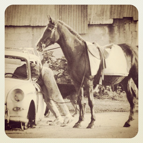 Horsing Around (vintage)