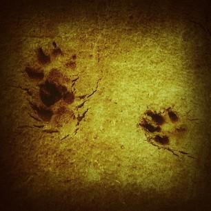 First footprints...