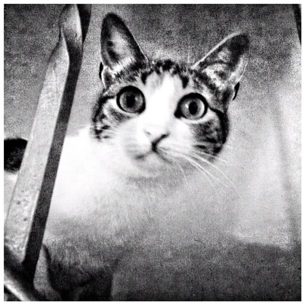My sister's cat