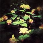 Childhood Flowers