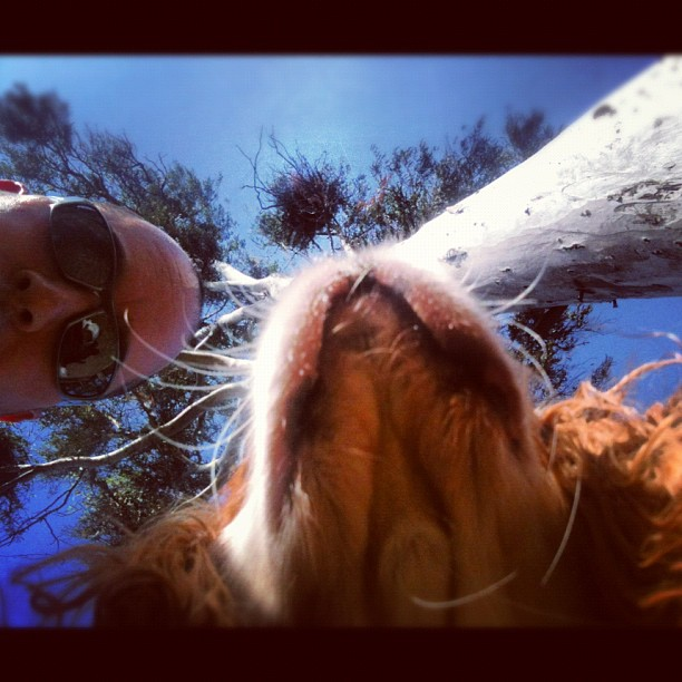Myself, my dog, @blueeyefcavalier and a tree