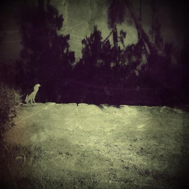 Surreal Night Heron