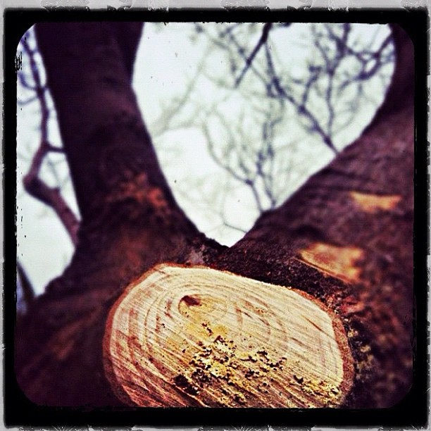 The Wounded Tree