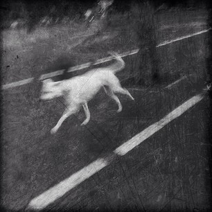 The White Hound