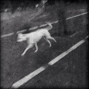 The White Hound